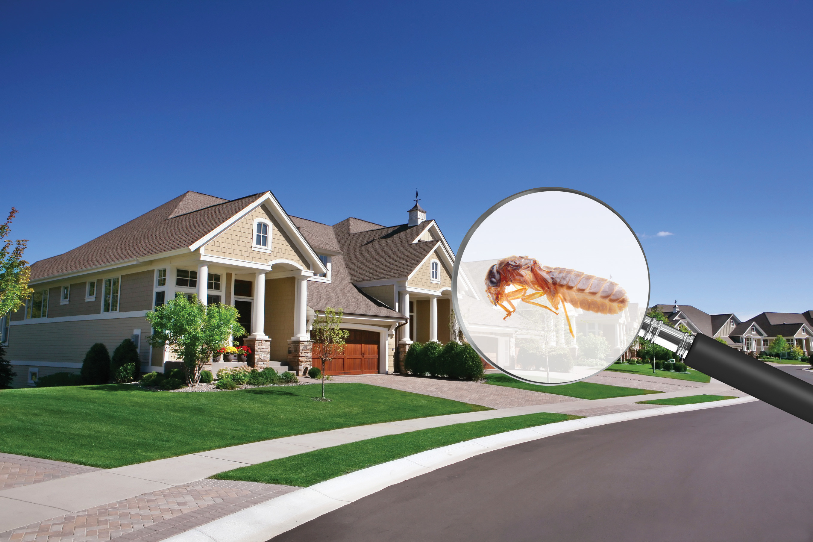 How To Sell Or Buy A House With Termite Damage