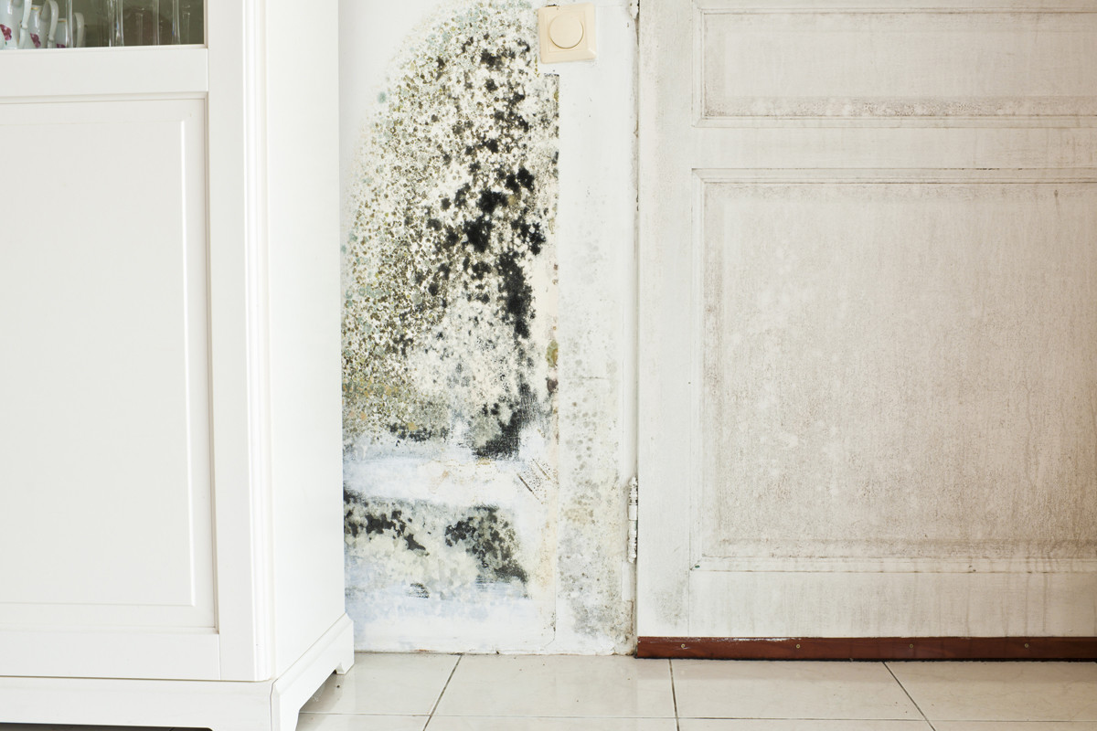 Should You Your House With Mold
