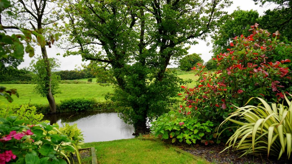 Should you install a backyard pond? | Pond in nature