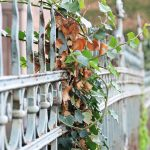Overgrown fence