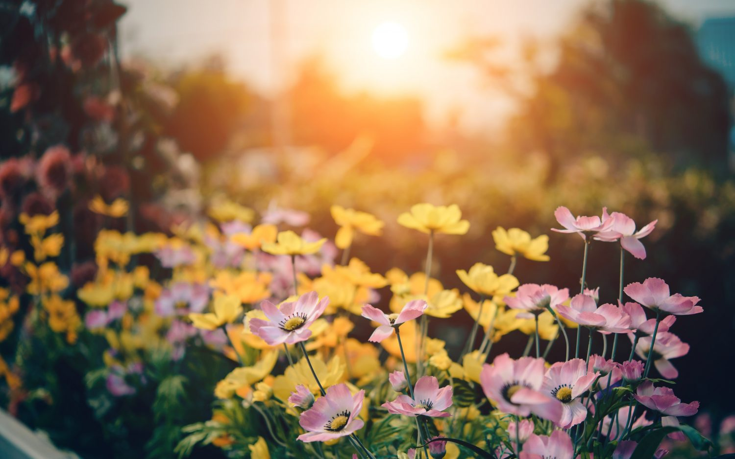 Use flowers to sell your home | Flowers in the sunset